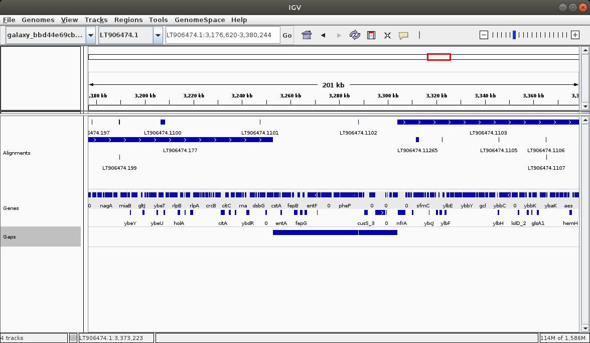 Making sense of a newly assembled genome
